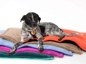 Blankets-mit-Hund-2Low