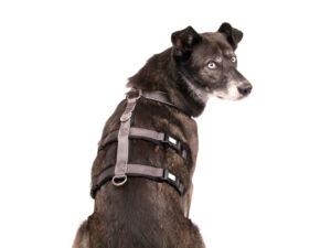 Sicherheitsgeschirr – Patch&Safe – Silver-Black, L