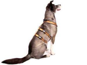Sicherheitsgeschirr – Patch&Safe – Gold-Black, M
