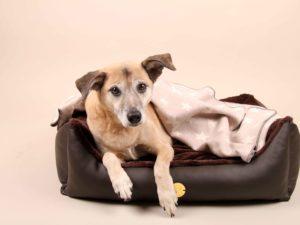 Hundebett-S---Braun-Bajan