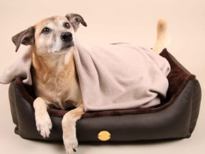 Hundebett-S---Braun-Bajan10