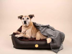 Hundebett-S---Braun-Bajan14