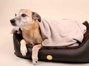 Hundebett-S---Braun-Bajan8