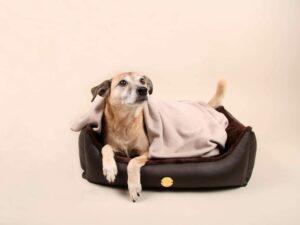 Hundebett-S---Braun-Bajan9