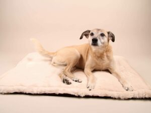 Cuddle&Snuggle-beige-Fell---Bajan2
