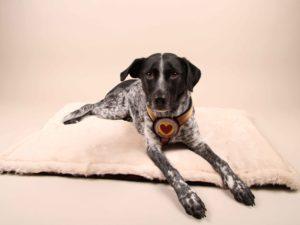 Cuddle&Snuggle-beige-Fell---Finn2