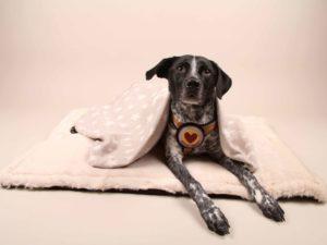 Cuddle&Snuggle-beige-Fell---Finn3