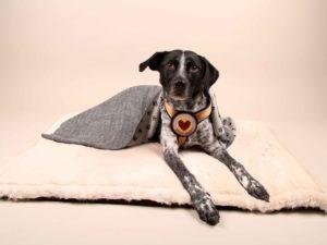 Cuddle&Snuggle-beige-Fell---Finn6