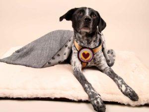 Cuddle&Snuggle-beige-Fell---Finn7