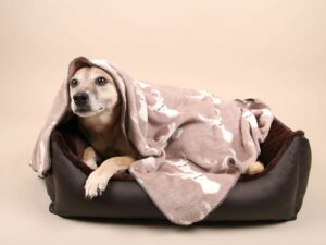 Hundebett-S---Braun-Bajan15